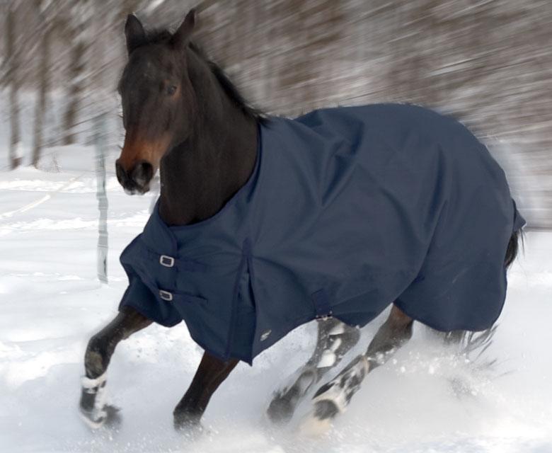 Winterdecke Pferd – für Sportpferde