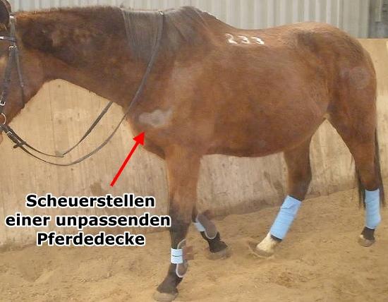 Brustschutz für Pferde – Scheuerschutz unter Pferdedecken