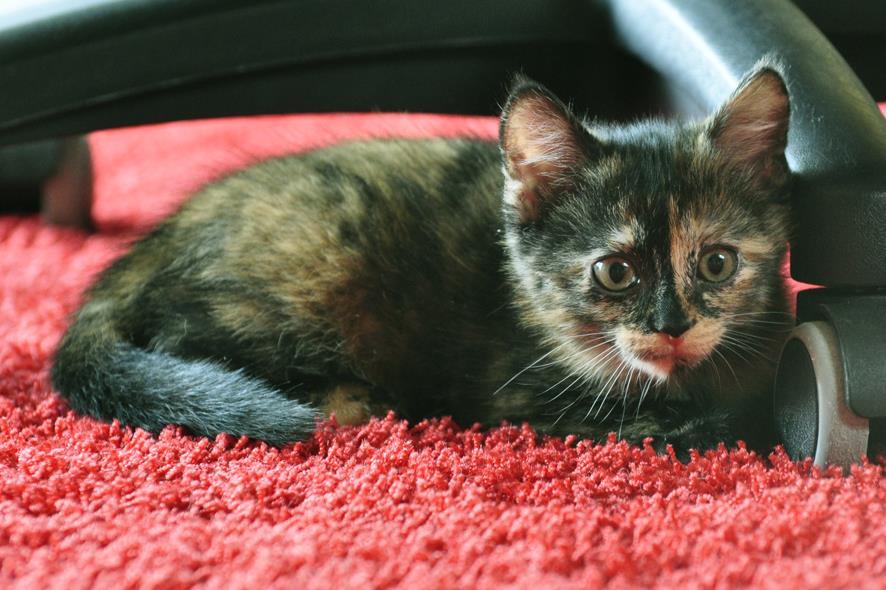 Junges Kätzchen sucht neues Zuhause