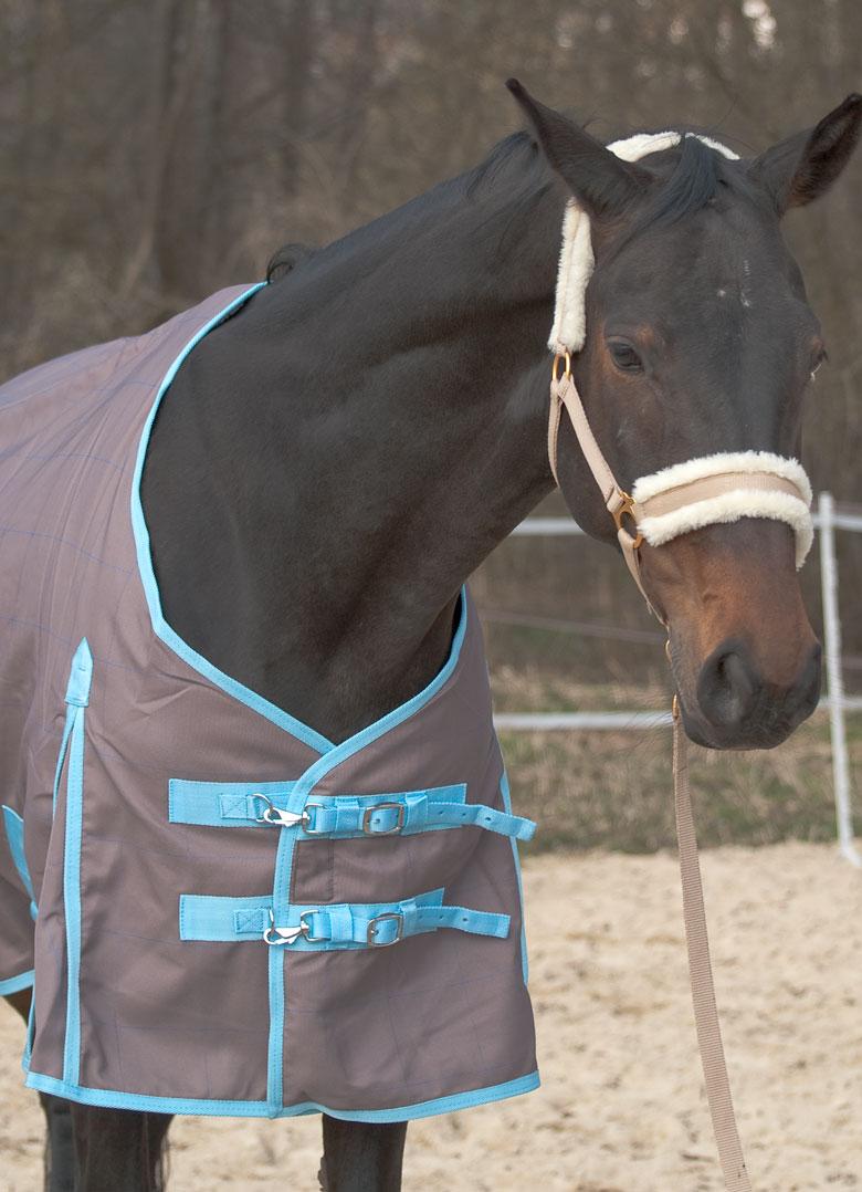 Paddockdecke für´s Pferd
