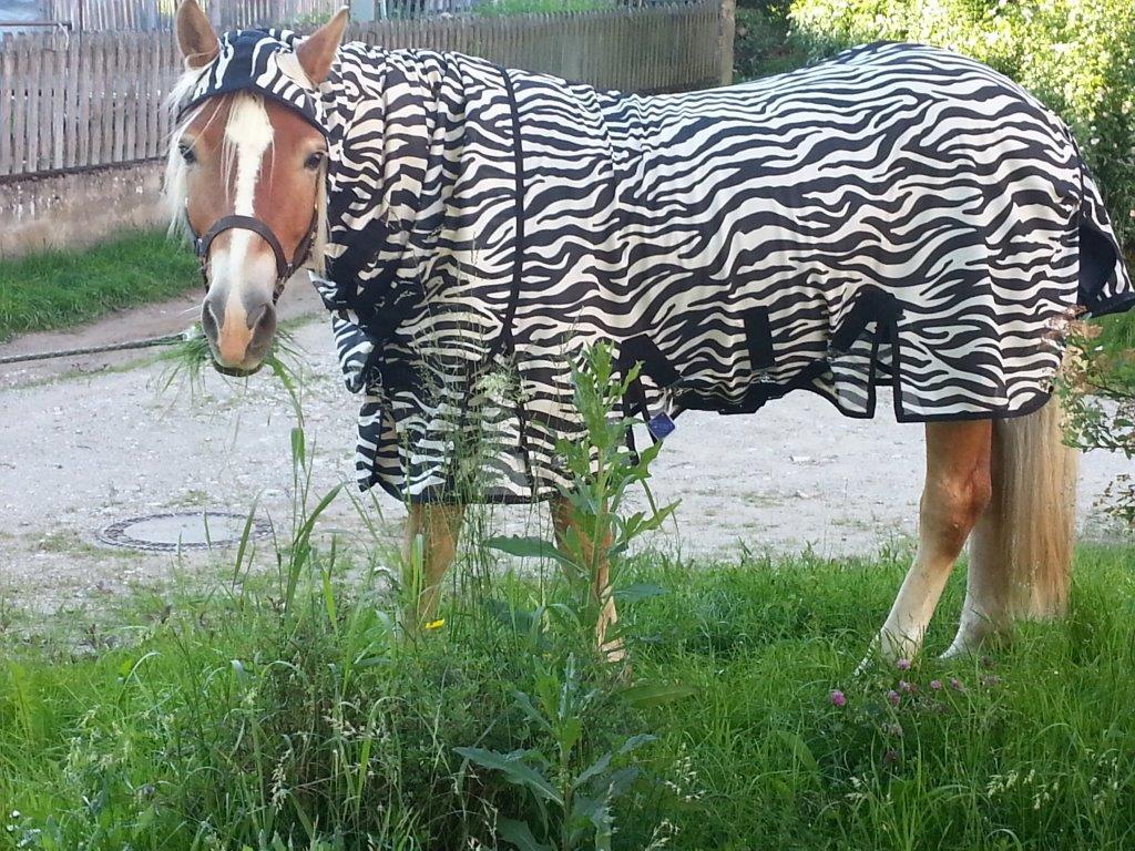 Fliegendecke Zebra für Haflinger