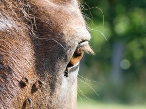 Fliegenschutz Pferdekopf