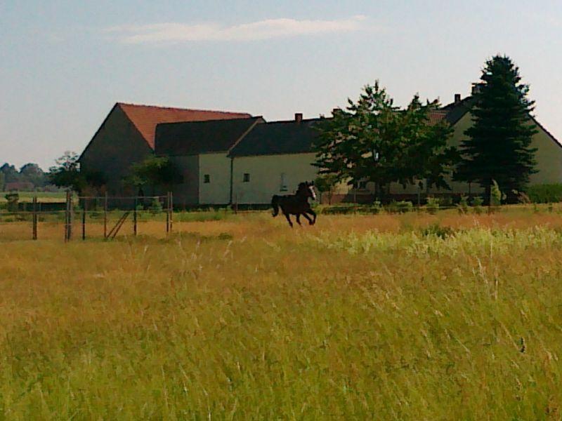 Totilas – ein phänomenales Pferd?