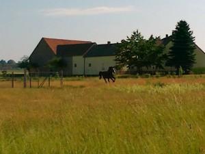 Oase für Pferde