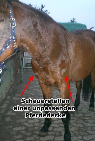 Brustschoner für Pferde sinnvoll?