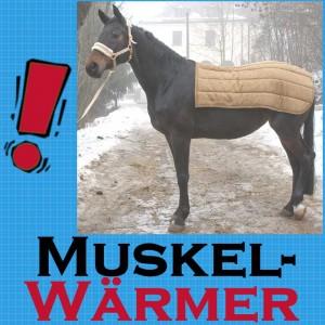 Beratung zum Einsatz von Keramikstoff – Rückenwärmer Pferd