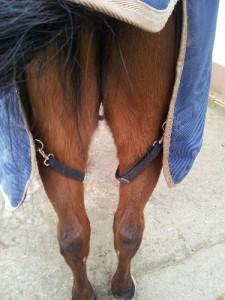 Beingurte Pferdedecke wie verschnallen ?