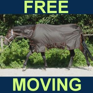 Beratung Regendecke Free moving für Haflinger