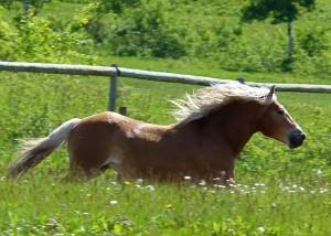 galloping-123018_640
