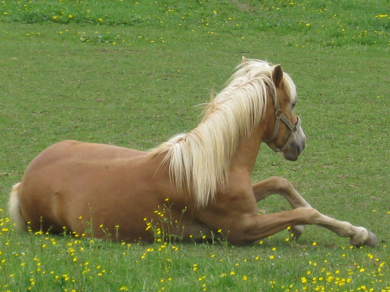 Was ist an Pferden so faszinierend?